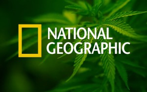 National Geographic weighs in on weed.