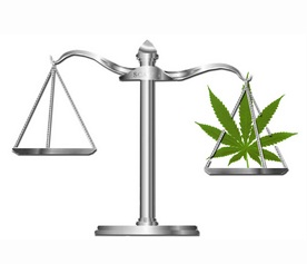 What kind of cannabis lawyer do you need?